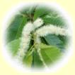 栗蜂蜜(はちみつ)