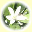 みかん蜂蜜(はちみつ)