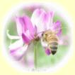 れんげ蜂蜜(はちみつ)